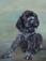 Schilderij puppie van Robert van Beurden.3